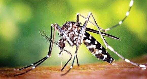 moustiques tigres quelle protection anti moustique choisir maman m me pire. Black Bedroom Furniture Sets. Home Design Ideas